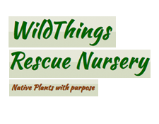 Wildthings Rescue Nursery, Valley Falls NY