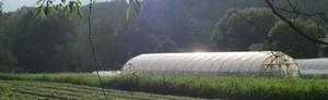 Denison Farm