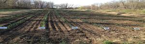 Hudson Valley Garlic Growers
