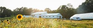 Forts Ferry Farm