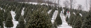 Kuzmich Christmas Tree Farm