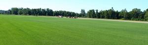 Saratoga Sod Farm