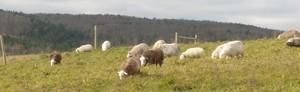 Helder~Herdwyck Farm