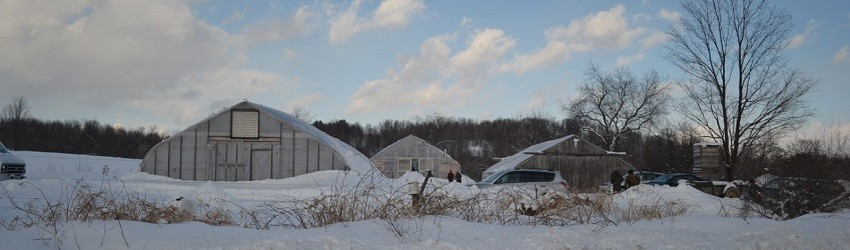 Locally Grown Winter Crops and Ways to Support Farmers
