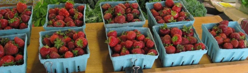 Handling and Freezing Tips for Your Strawberry Harvest