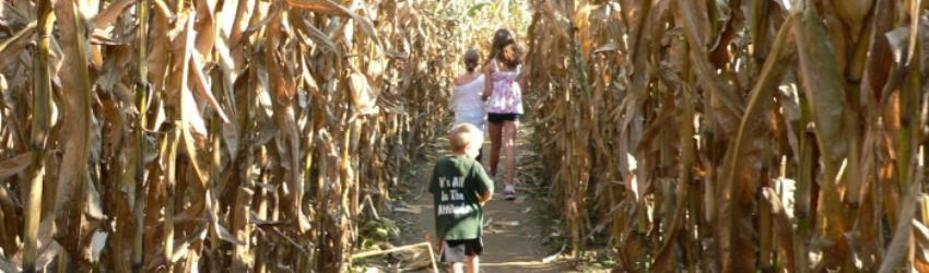 Fall Fun on the Farm and 2020 Guidelines