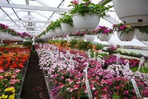Greenhouse and Nursery Plants